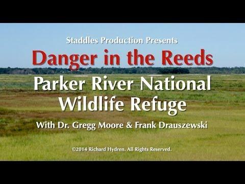 Parker River National Wildlife Refuge, Danger In The Reeds