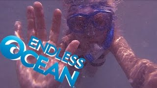 Ross and Holly Play Endless Ocean - Hawaii - Commander Holly Show