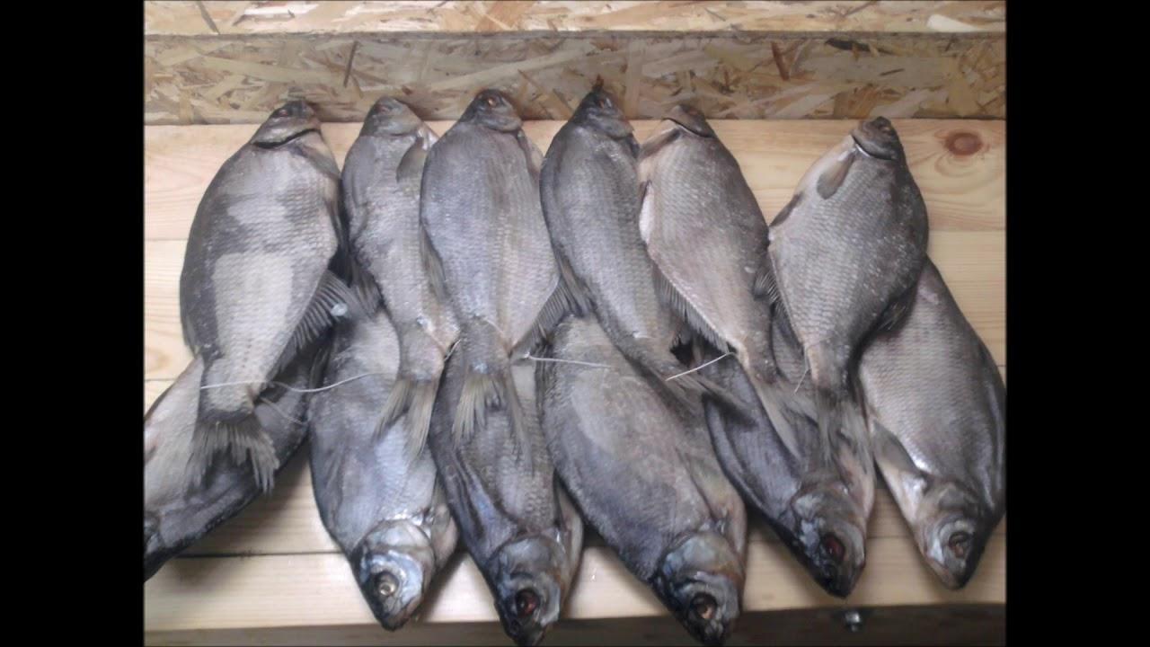 Вяленая,сушеная рыба, Как солить Плотву,Тарань, Леща.