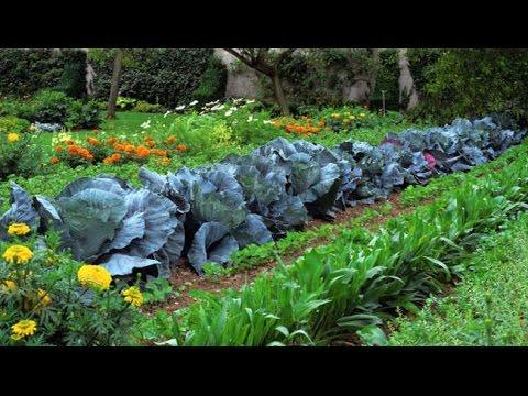 Огород своими руками 100 фото скачать