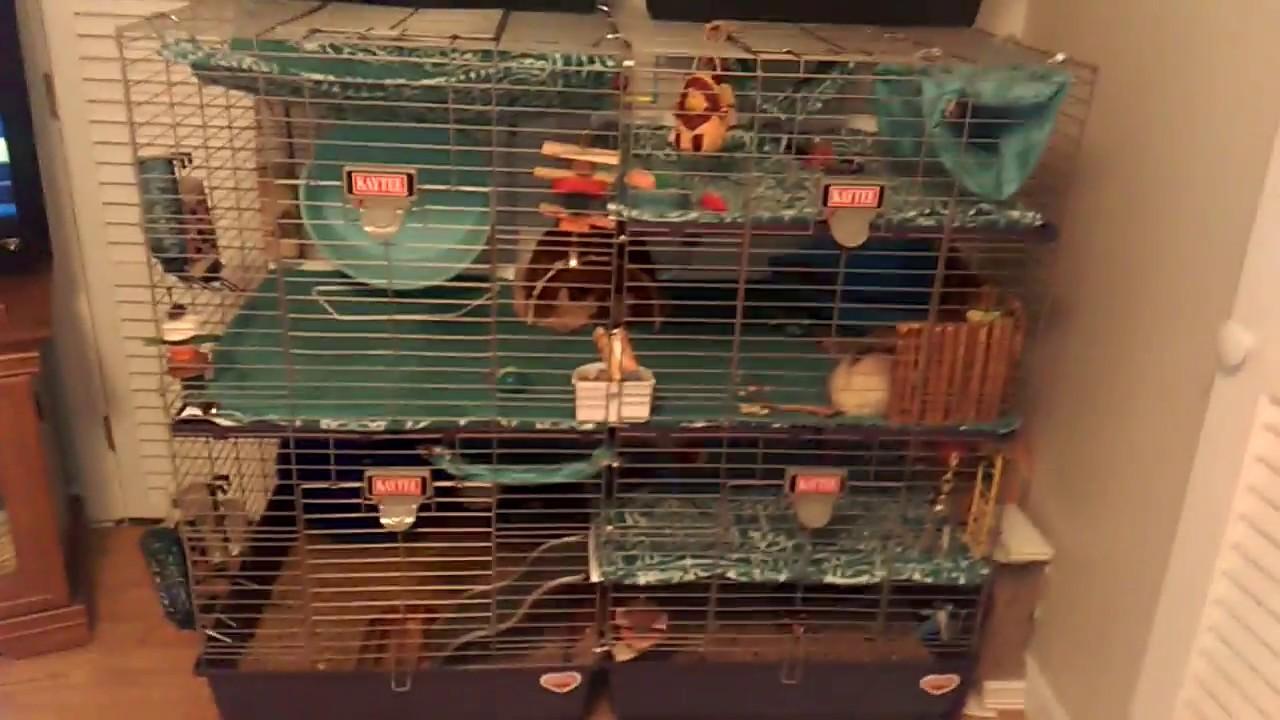 HUGE Cage For Ferrets Or Rats Connected 2 Cages