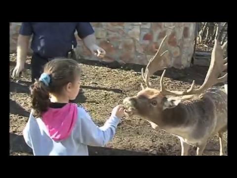 MOUNTAIN RESORT COMPLEX WITH BIO FARM IN BULGARIA NEAR TO SOFIA /Туристически комплекс с био ферма
