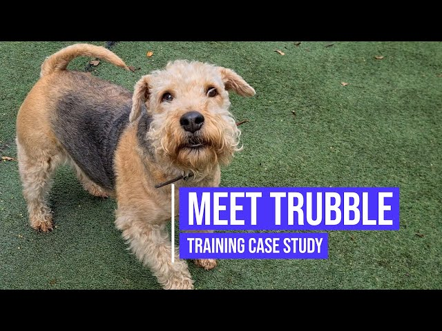 Helping a terrier with its reactivity towards other dogs