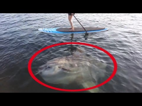 Thumbnail: 5 Giant Fish | Fishing Moments | Huge Fish Caught On Camera
