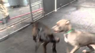 McMurray, Rocky, Triebble , Ginger play group