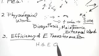 Energy Metabolism PART 1 Concepts