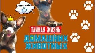 Тайная жизнь домашних животных. 1 часть