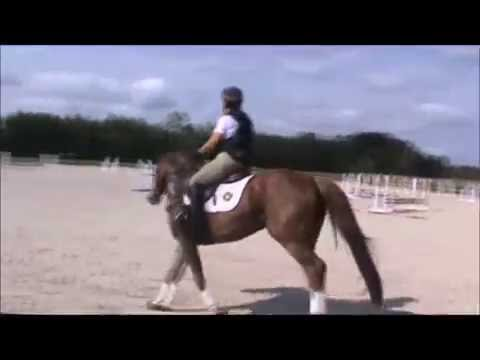 Horse for sale, pony club, eventing, show jumping, jumper, dressage, thoroughbred, for sale