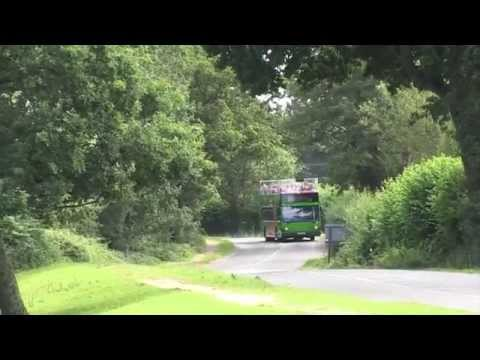 The New Forest Tour - a great day out from London