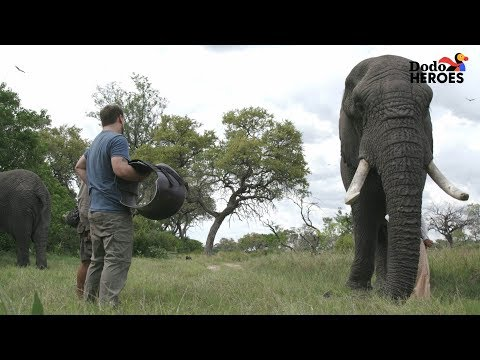 Elephant Who Hurt His Leg Gets Help From A Hero | Dodo Heroes Season 1