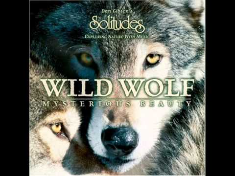 Download Dan Gibson - Wild Wolf Mysterious Beauty - 05 Watchful Eyes.wmv