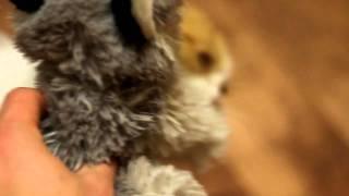 Котенок грызет мягкую игрушку