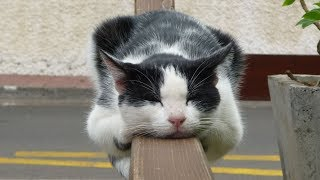 Самые прикольные кошки 2. Смешное видео