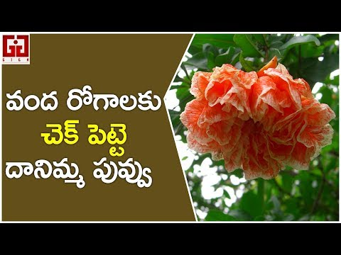 top-10-benefits-of-pomegranate-flowers-for-your-health-|-health-tips-telugu-|-giga-aarogya-rahasyam