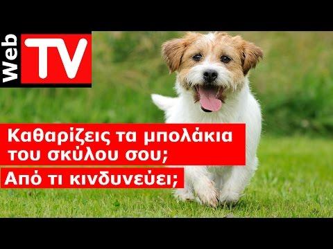 Καθαρίζεις τα μπολάκια του σκύλου σου; Από τι κινδυνεύει;