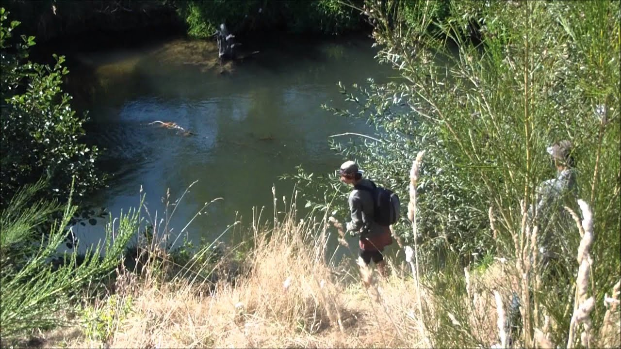 spin fishing for trout nz 2014 - youtube, Fly Fishing Bait