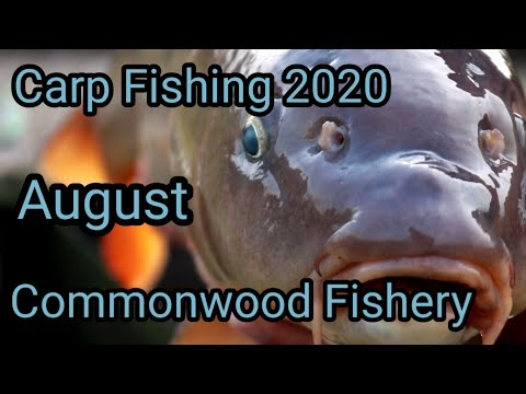 **Carp Fishing 2020** Commonwood Fishery, Llewellyn  Lake, North Wales. August 2020