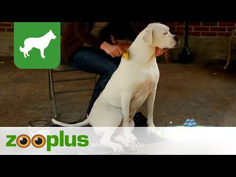 FURminator kurzes Hundefell