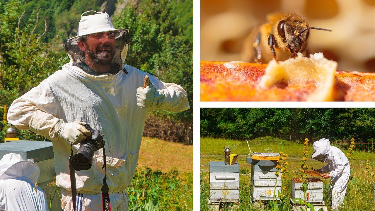 apiculteur 41