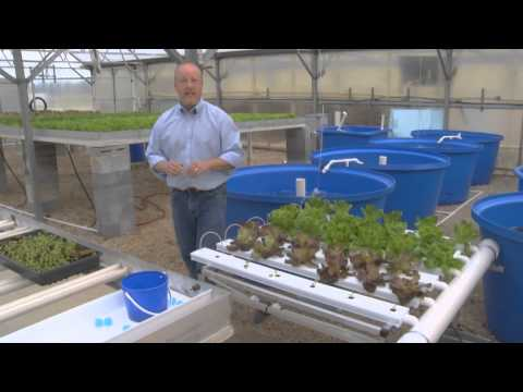 Greenhouse Aquaponics - From the Ground Up