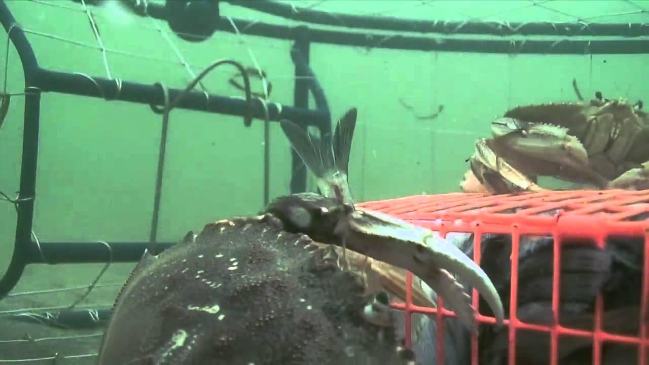 Grant's Getaways: Columbia Crabbing