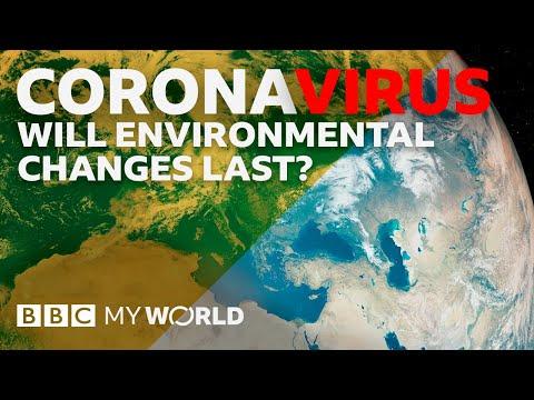 Will the environment benefit from Coronavirus? - BBC My World