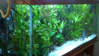 55g Planted, 6g Fluval, 75g Planted, Coffee Table Fish Tank, 55g Brackish