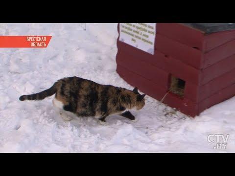 Теплый дом для кошки на улице своими руками