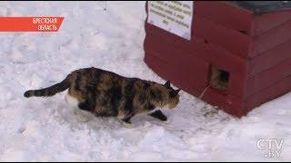 Тёплые домики для уличных котов установили в Кобрине