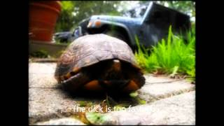 Turtle Porn Video