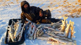 Рыбалка на жерлицы 2021 Их НЕЛЬЗЯ оставить БЕЗ ПРИСМОТРА ЖОР крупной щуки