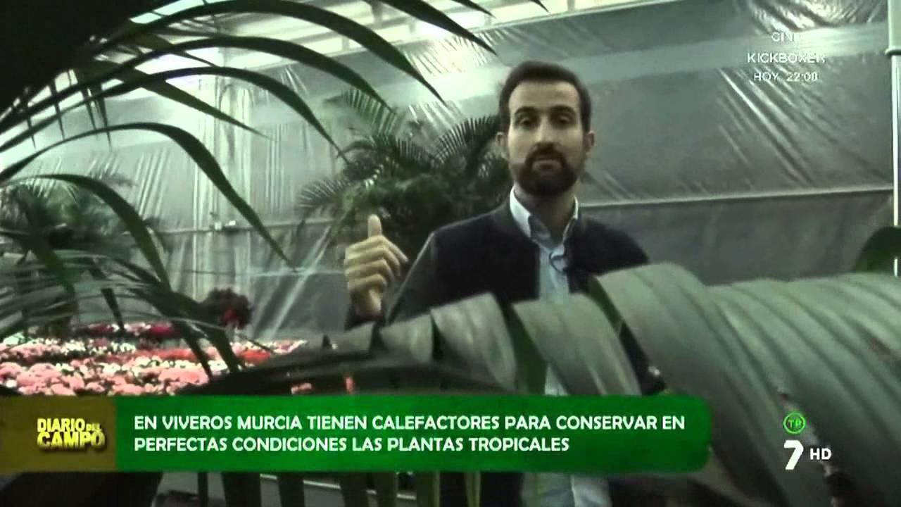 Viveros murcia en diario de campo 7 tv youtube - Viveros de murcia ...