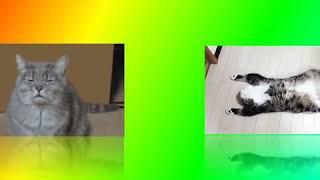 FUNNY CATS, funny select---СМЕШНЫЕ КОТЫ, приколы, подборка