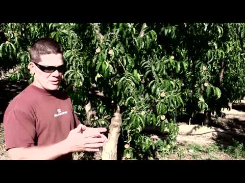 LaRosa Farms Interview