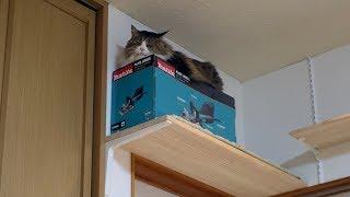 ジョイントカッターハウスをベッドにしてみたボス猫 thumbnail