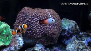 Aquariums of InterZoo 2012 (pt. 35) - PT Agung Aquatic Marine