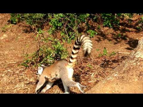 18 Madagascar -  Ranohira,  Isalo Natiolal Park - Part Two