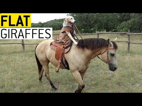 All the Pretty Horses || JukinVideo