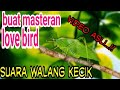 Suara Walang Kecek  Asli Untuk Masteran Love Bird  Mp3 - Mp4 Download