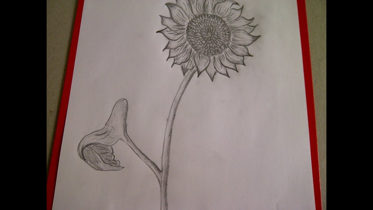 Como Dibujar Flores Como Dibujar Un Girasol Como Hacer Un Dibujo Para Principiantes