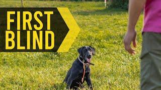 How To Teach Your Dog To Run Their First Blind Retrieve