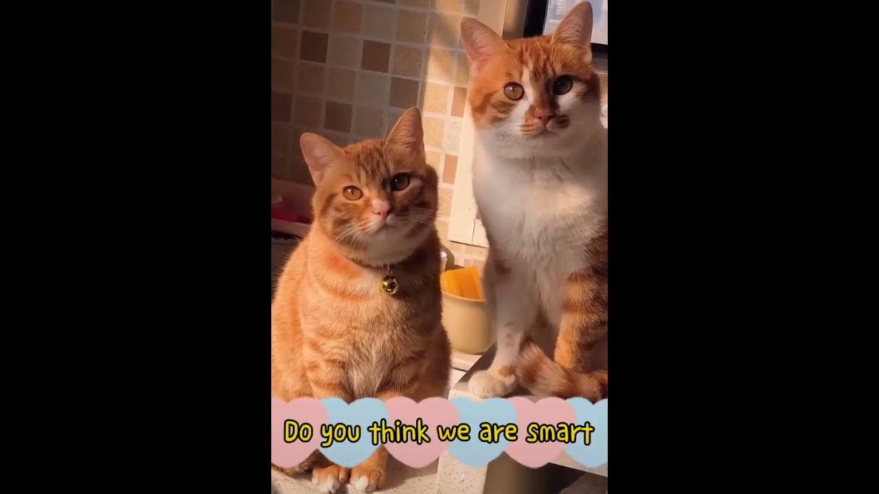 Funniest Cats 😹 Don't try to hold back Laughter Part #327