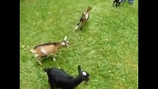 Koza z ADHD :D