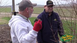 Winter Pruning January 2018