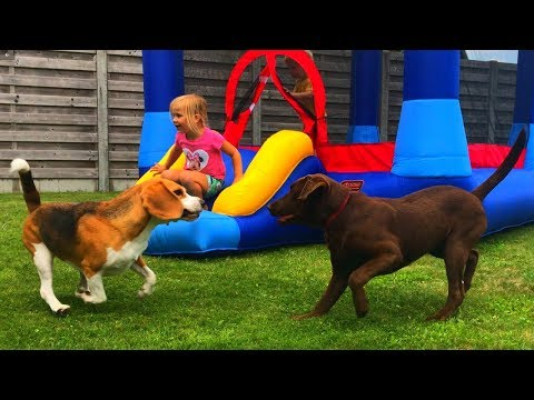 Beagles are The BEST Family Dogs! Funny Beagles Playing with Kids.