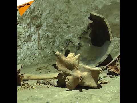 Ancient Necropolis, Mummified Priest's Remains Unearthed Near Cairo
