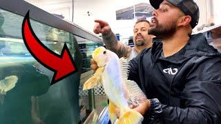 million-to-1-exotic-fish-for-sale-at-fish-auction-rare