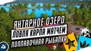 Русская Рыбалка 4 Стрим Как ловить карпа матчем Ловля Матчем на Янтарном озере