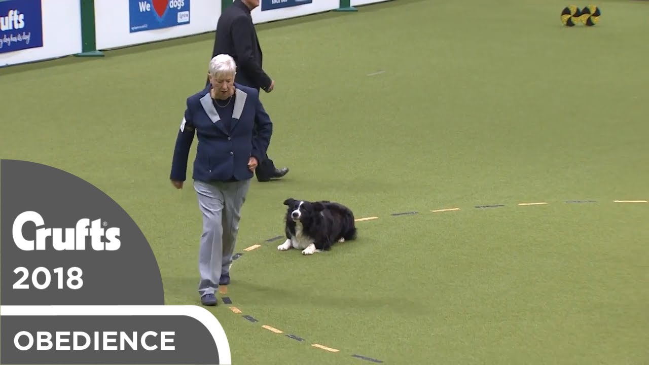 Obedience - Dog Championship - Part 19   Crufts 2018