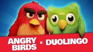 Angry Birds X Duolingo | The Team-Up!